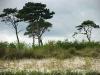 Drzewa na wydmach